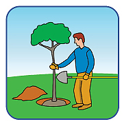 Graphic of a person planting a tree.