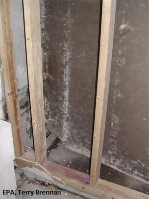 Mold inside wall cavity