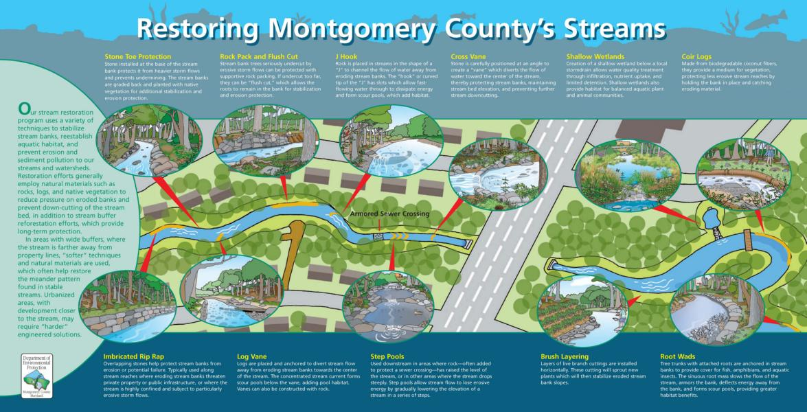 Image of Restoring Montgomery County's Streams