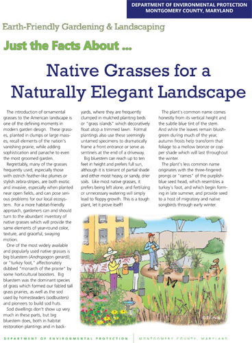 Native Grasses for a Naturally Elegant Landscape