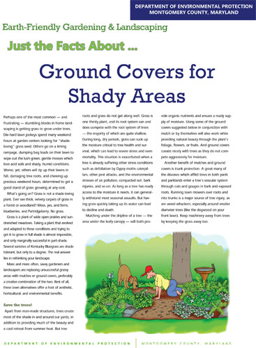 Ground Covers for Shady Areas