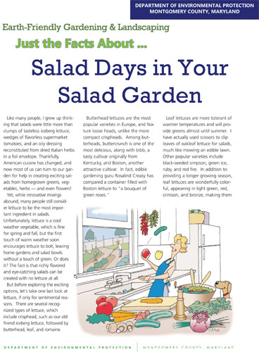 Salad Days in Your Salad Garden