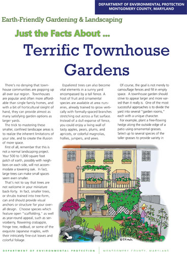 Terrific Townhouse Gardens