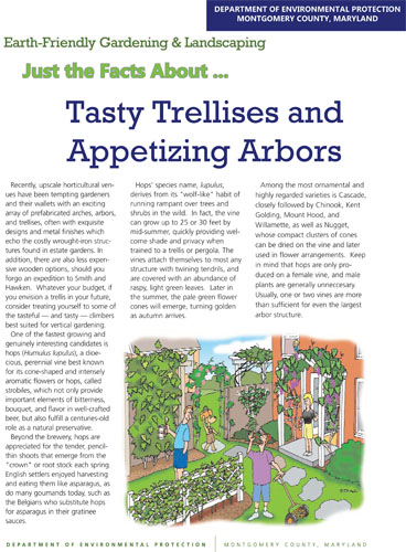 Tasty Trellises and Appetizing Arbors