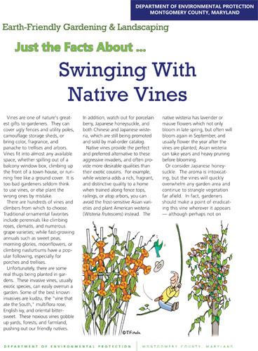Swinging With Native Vines