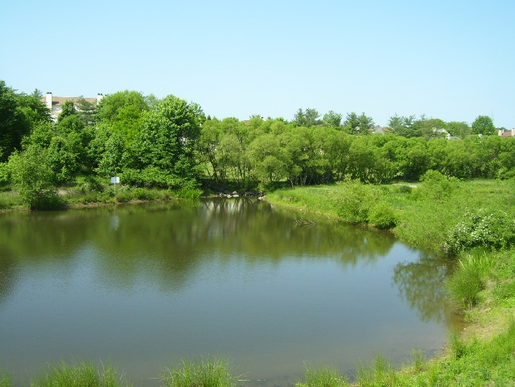 Image of a pond.