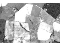 An Image of Digital Aerial Photo