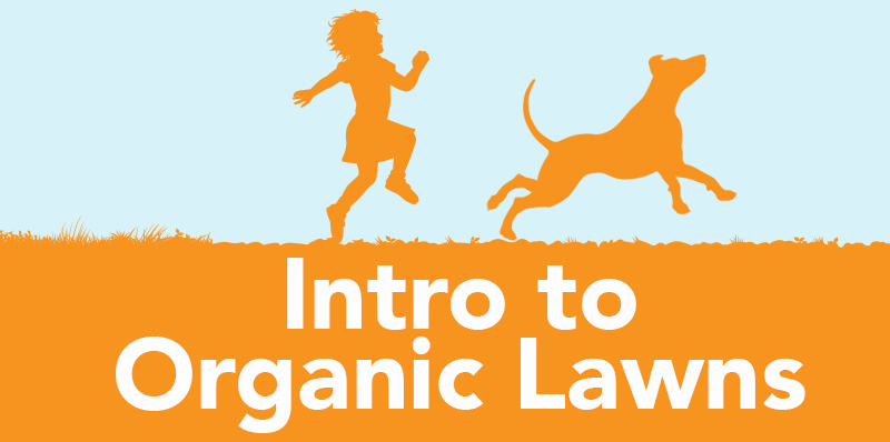 Intro to organic lawns