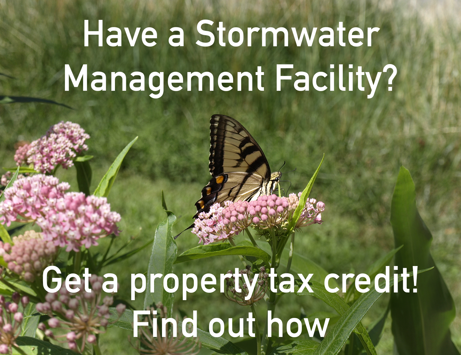 Butterfly on a stormwater management facility
