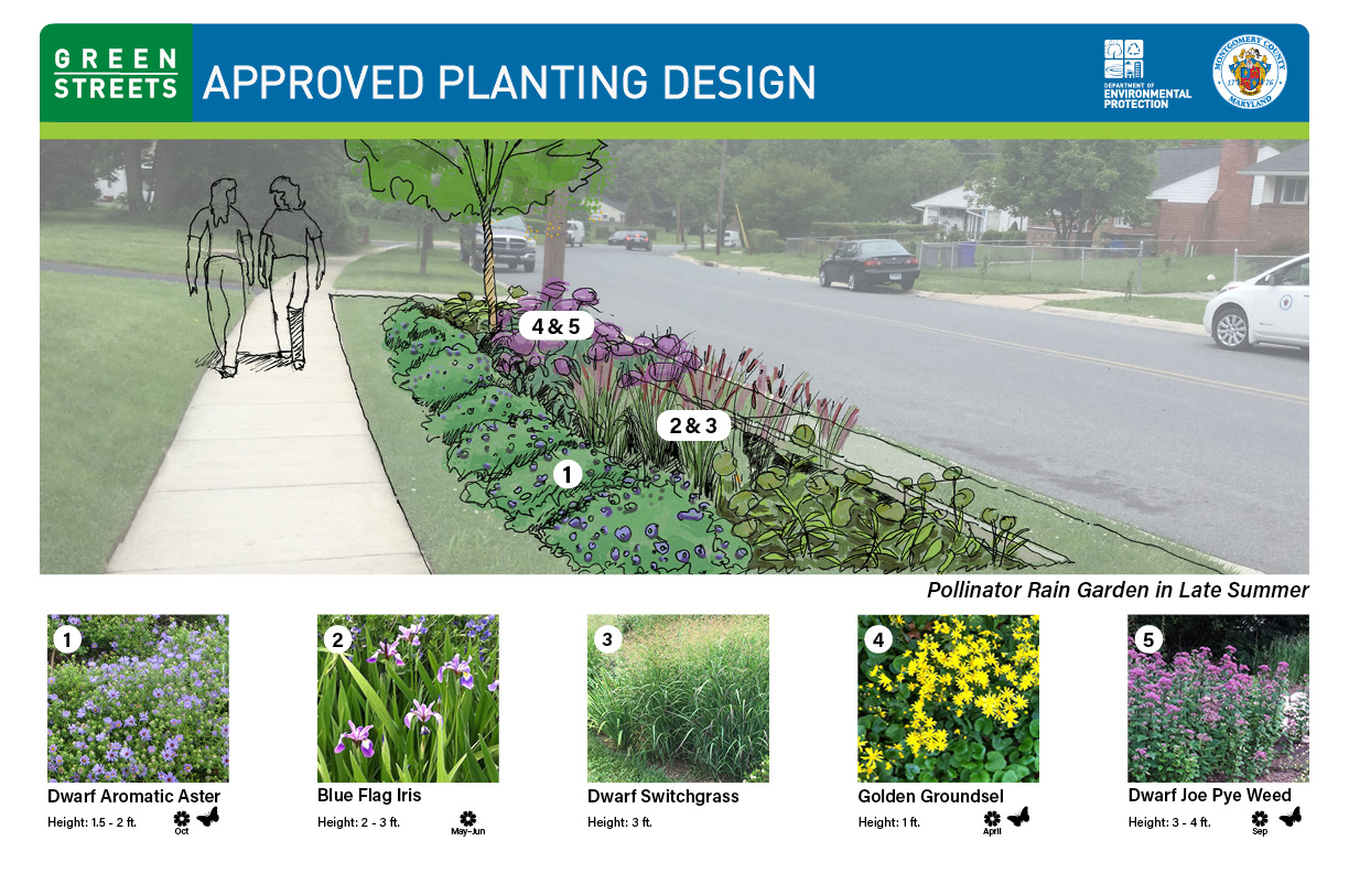 Glenmont Forest Green Streets Landscape Plan Template